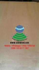 Plywood Supplies - Birch  BB/BB, BB/CC Natural Plywood China