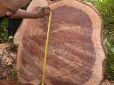 A/B (first) 60+ cm Bubinga Saw Logs in France
