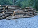 Romania Hardwood Logs - 28+ mm, Oak (European), Saw Logs