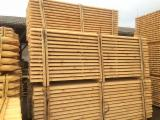 Softwood Logs for sale. Wholesale Softwood Logs exporters - Machine-rounded poles