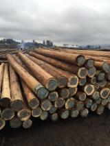 Hardwood Logs Suppliers and Buyers - Eucalyptus Veneer logs