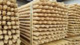 Softwood  Logs - Cundy peeled poles