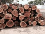 Tropical Wood  Logs - Reject veneer logs 20 cm Saw Logs in Colombia
