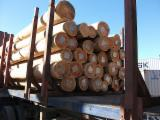 Hardwood Logs importers and buyers - Purchasing Eucalyptus logs