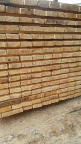 Cut Dry Pine Timber