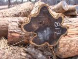 Tropsko Drvo  Trupci - Za Rezanje, Mozambik