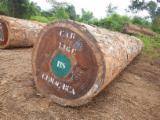 Tropsko Drvo  Trupci - Za Rezanje, Sapelli (Sapele, Aboudikro, Penkwa, Lifaki), sa Vijetnam
