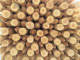 Softwood  Logs For Sale - Pine, spruce stakes 1000-2500mm;d 50-120mm