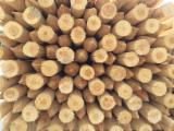 Grumes Résineux Pin De Sibérie à vendre - Vend Poutres Rondes En Forme Conique Pin/Epicéa