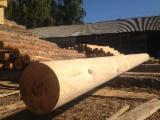 Softwood  Logs - Construction round beams, Pine (Pinus sylvestris) - Redwood