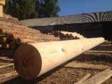 Konstruktionsrundholz, Kiefer  - Rotholz