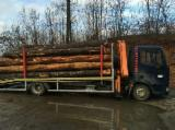 Transportne Usluge Drveta - Kontaktirali Transportera Drveta - Drumski Transport, - kamiona Spot - 1 put