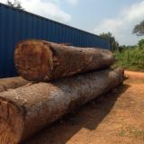 Tropical Wood  Logs For Sale - IROKO LOGS