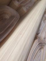 Buy Or Sell  Engineered Veneer - Poplar, Serotina Flat Cut, Plain Engineered Veneer in China