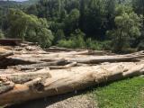 Beech  Hardwood Logs for sale. Wholesale exporters - 20-80 cm Beech (Europe) Saw Logs in Romania