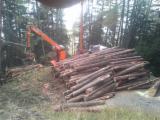 Services Forestiers - Abattage Mécanisé Italie