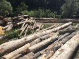 Beech  Hardwood Logs for sale. Wholesale exporters - -- cm Beech (Europe) Firewood in Romania