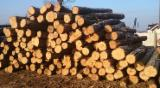 Acacia Hardwood Logs - 18+ cm Acacia Saw Logs in Poland