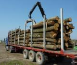 Sweden Hardwood Logs - Basswood Industrial Logs 26 cm
