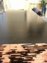 Poplar Plywood - China Shuttering Plywood