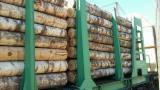 Hardwood Logs for sale. Wholesale Hardwood Logs exporters - 18-40 cm Birch (Europe) Veneer Logs in Russia