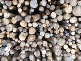 Beech  Hardwood Logs for sale. Wholesale exporters - 100-300 mm Beech (Europe) Industrial Logs in Lithuania