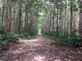 Tropical Wood  Logs - Teak Logs