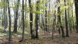 Woodlands - Oak Woodland Romania 26000 m2 (sqm)