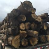 Hardwood  Logs - 25 cm Oak (American White)  Conical Shaped Round Wood in Costa Rica