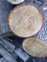 Hardwood Logs for sale. Wholesale Hardwood Logs exporters - дуб кругляк