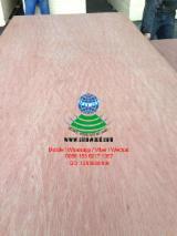 3.0mm bintangor face plywood poplar core mr glue with cheap prices, bb/cc