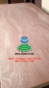 18mm rotary cut sapelli/sapele face/back plywood, commercial plywood, BB/CC