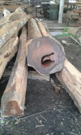 Tropical Logs for sale. Wholesale Tropical Logs exporters - Cocobolo ( dalbergia retusa) from Panama