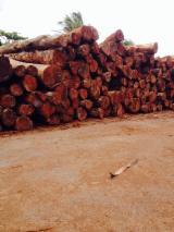 Tropsko Drvo  Trupci - Cilindrični Obrubljene Okrugle Grede , Keruing, sa Vijetnam