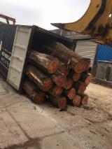 China Tropical Logs - Purchase Cypress Log