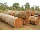 Tropical Wood  Logs - Import Pachyloba ( Round logs, rough square logs, sawn lumber)