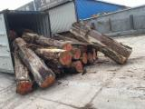 Tropical Logs importers and buyers - Purchasing Cypress logs