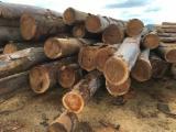 Hardwood Logs importers and buyers - Australian Hardwood & Softwood