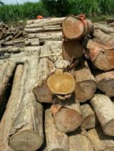 Tropsko Drvo  Trupci - Konusno Oblikovani Okrugle Grede, Teak, sa Vijetnam
