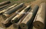 Paraguay - Fordaq Online market - Palo Santo Logs debarked with lathe (Bulnesia Sarmientoi)
