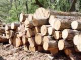 Evidencije Trupaca Za Prodaju - Drvenih Trupaca Na Fordaq - Za Rezanje, Bor  - Crveno Drvo