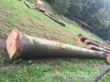 Beech-Logs-Delivery-in-Winter