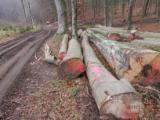 Hardwood Logs Suppliers and Buyers - 40+ cm Beech (Europe) Saw Logs in Germany