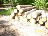 Hardwood Logs Suppliers and Buyers - 40+ cm Oak (European) Saw Logs in Germany