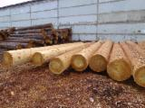 Softwood  Unedged Timber - Flitches - Boules For Sale - Larch (Larix) Boules 10+ mm in Russia