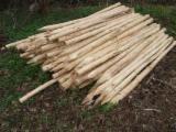 Sprzedaż Hurtowa Produktów Ogrodowych - Fordaq - Akacja