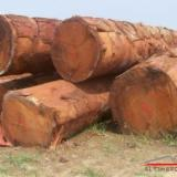 Hardwood Logs For Sale - Register And Contact Companies - IMPORT ROUND LOGS (Doussie LOGS)
