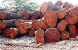 Standing Timber - Standing Timber in Venezuela