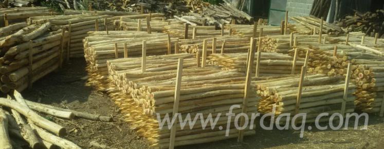 Vend piquets tuteurs acacia bosnie herzegovine - Tuteur bois brico depot ...