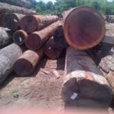 Find best timber supplies on Fordaq - Tropical Hardwood logs/sawn